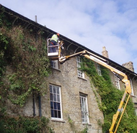 Removing Vines - Oxford - Trees & Gardens Ltd