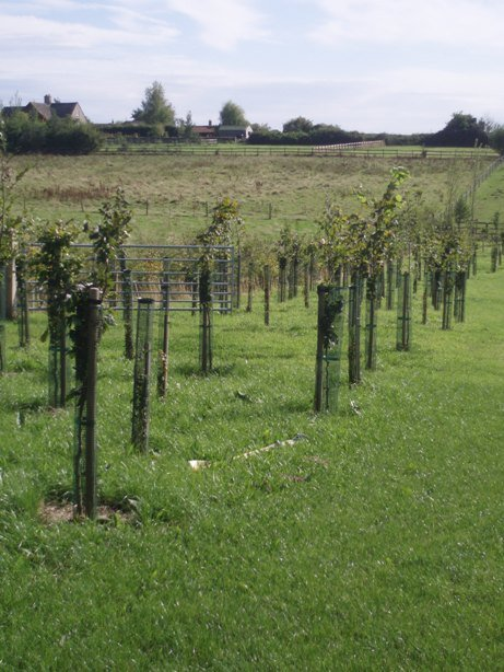 Trees Planted and Guarded - Oxford - Trees & Gardens Ltd