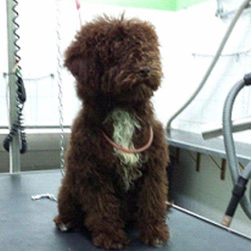 un cagnolino marrone