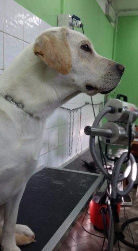 un cane bianco visto di profilo