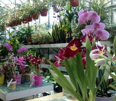 vendita orchidee Genova