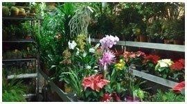 piante verdi e fiorite