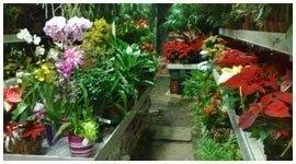 vendita piante decorative