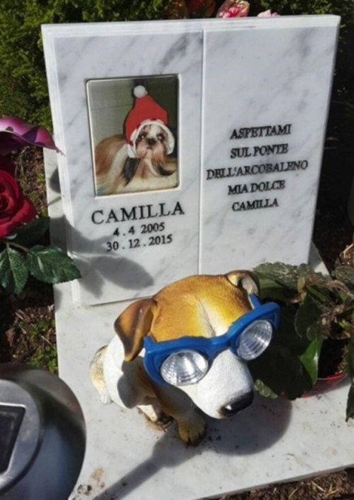 una lapide con la foto di un cane in un cimitero