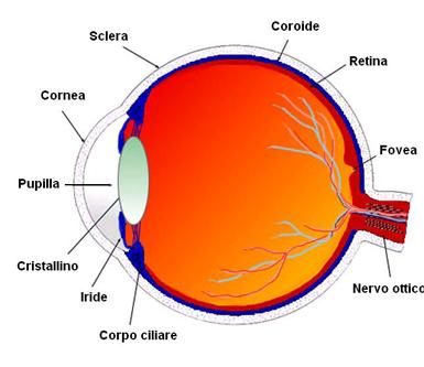 specialista in oftalmologia