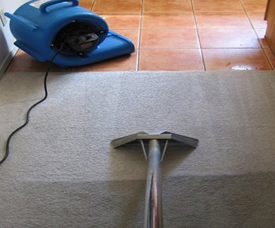 Our experts doing carpet cleaning and pest control