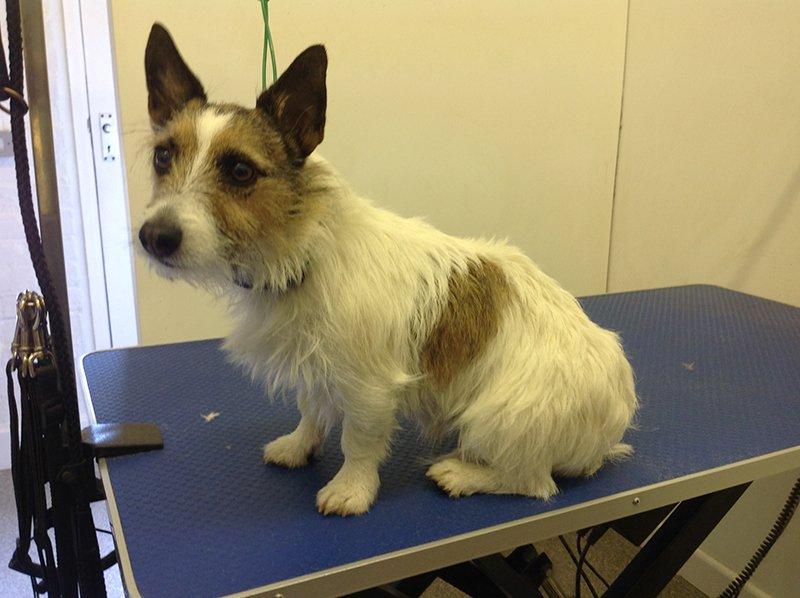 Dog bathing before