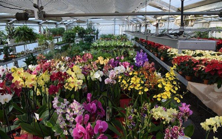 reparto orchidee e piante verdi