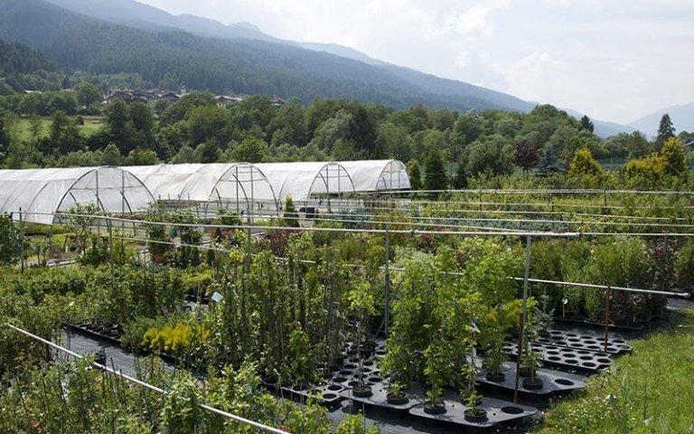 il vivaio con piante