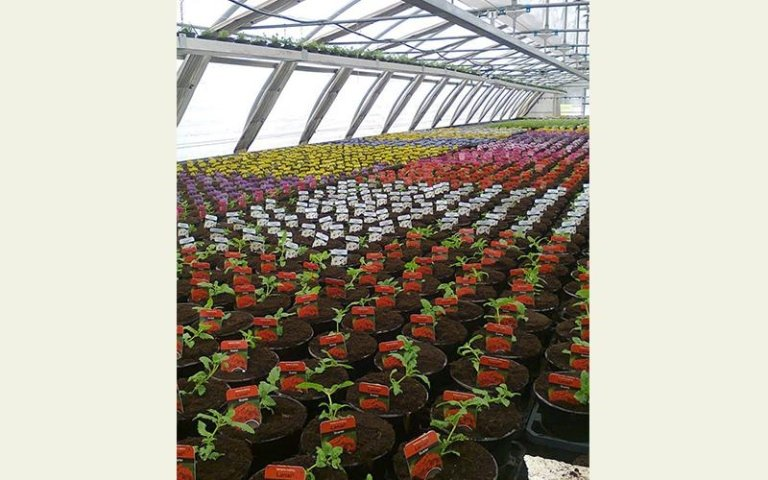 coltivazione