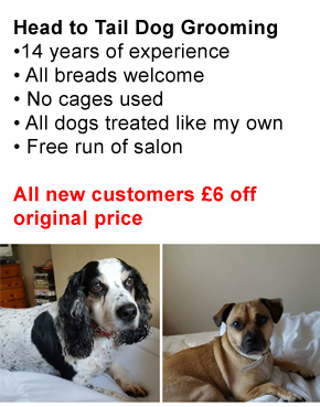Head To Tail Dog Grooming Stockton