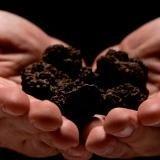 special truffles
