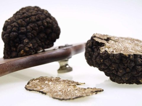 truffle exports