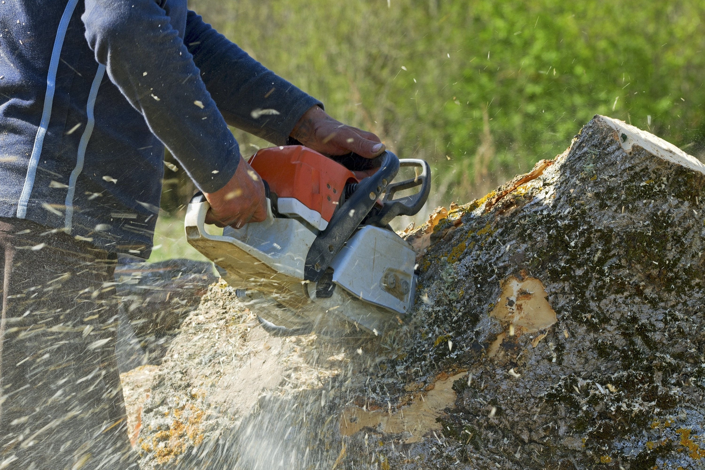 Worker cutting up a tree with a chain saw