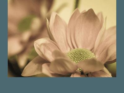 abbobbi floreali lecco