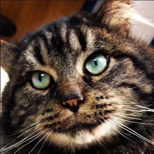 cat boarding Amherst, NY