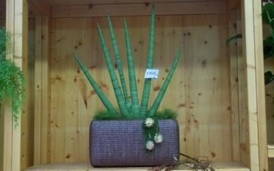 vaso pianta garden