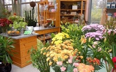 fiori garden