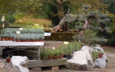 garden piante