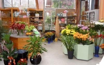 piante fiori garden