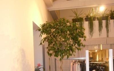 pianta ornamentale negozio