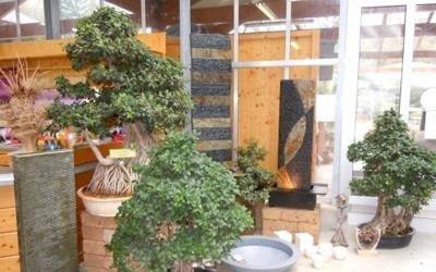 piante garden proposte