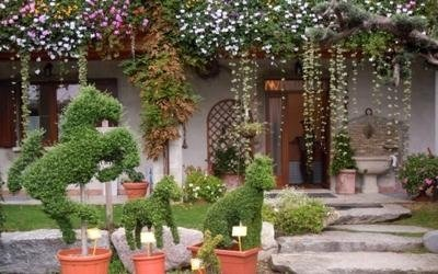 piante design