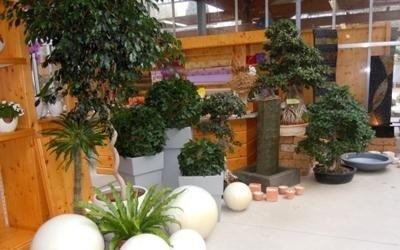 proposte piante