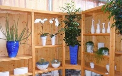 regalo piante