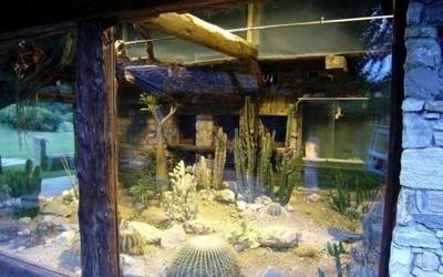 vetrina cactus