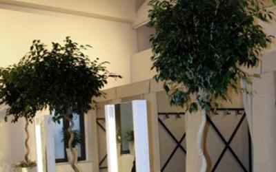 piante da ingresso