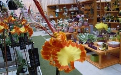 fiori vendita