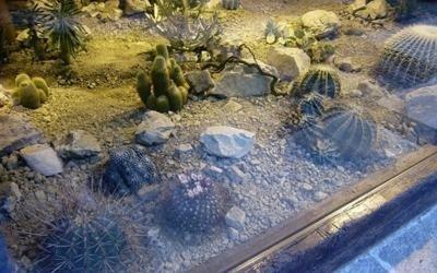 esposizione cactus