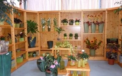piante vasi