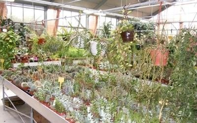 proposte garden