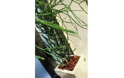 manutenzione piante negozio