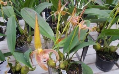 piante in vendita