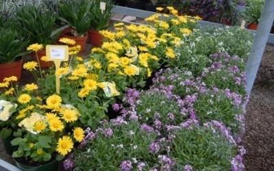 promozione piante
