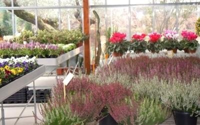 piante promozione