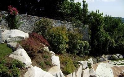 vegetazione giardino
