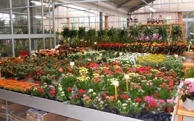 piante garden