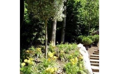 piante giardino manutenzione