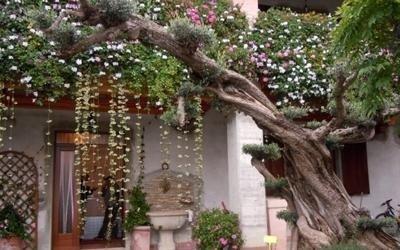 piante esterno