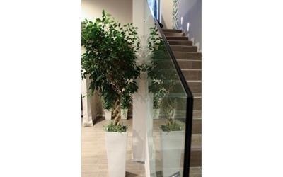 pianta per decorazione