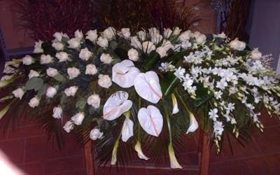 piante funerali