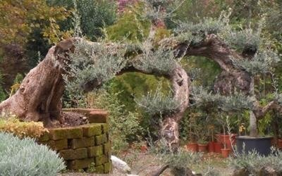 garden giardino