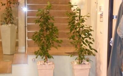piante scale negozio