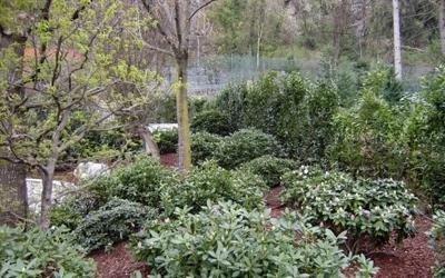 addobbi giardini