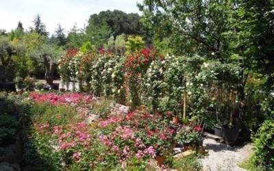 decorazione giardini