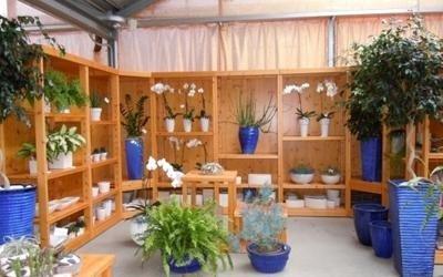 piante regalo